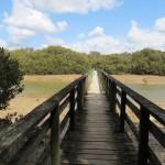 Paihia: à travers la mangrove