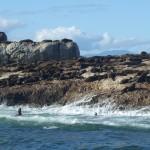 Mossel Bay: l'île aux phoques
