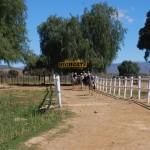 Course d'autruches