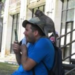 Ubud: la forêt des singes