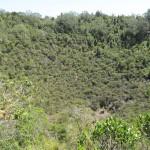 Mais le cratère du Rangitoto est...tout vert!
